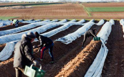 Travailleurs détachés : l'impératif des asperges l'emporte-t-il sur la pandémie ?